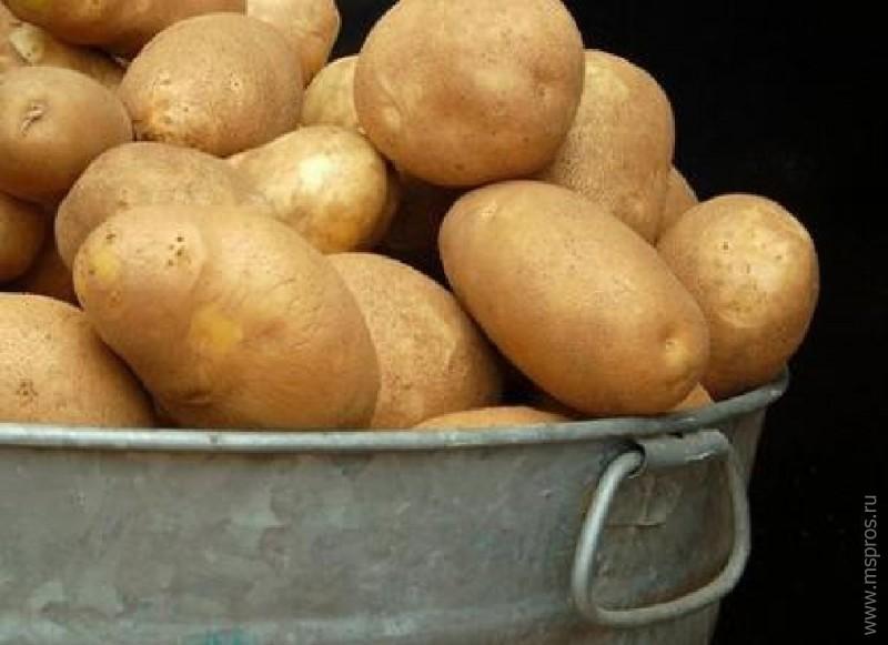 гороскоп выращивание картофеля в посуде Тутового шелкопряда Медведку